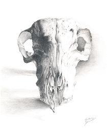 Skull von Greta Schimmel