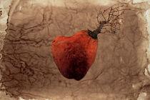 Coeur Transgénique von Maximiliano Galain