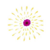 Yellow Flower by Jozef Zidarov