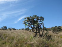 Baum auf exotischen Hochplateau von Baerbel Nitychoruk