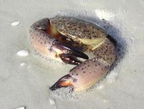 Die Krabbe von Baerbel Nitychoruk