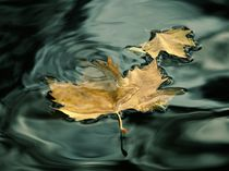 Love leaf with deep water