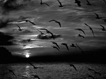 Silhouette of flying birds by Jozef Zidarov