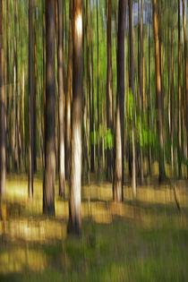Waldrausch VI von Hartmut Fittkau