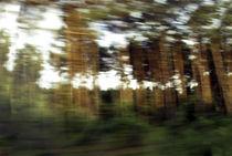 Fluechtiger Wald von Hartmut Fittkau