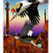 The-caliph-stork-1