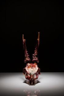 Skull study #10 von Nicolle Clemetson