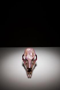 Skull study #6 von Nicolle Clemetson