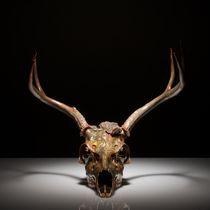 Skull study #4 von Nicolle Clemetson