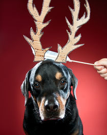 Rottweiler with Antlers. von Nicolle Clemetson