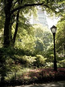 Central Park von Darren Martin