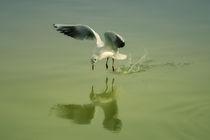 Flying bird by Jozef Zidarov