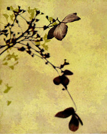 hydrangea art von Franziska Rullert