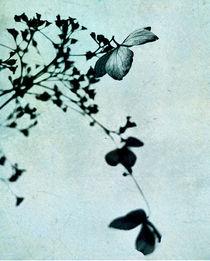 hydrangea blue von Franziska Rullert