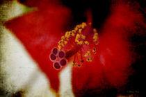Flower Abstract von Milena Ilieva