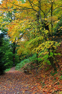 Weg durch den Herbst von Wolfgang Dufner