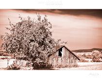 Appletree-barn by Waldemar Moll