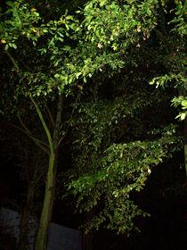 Alter Baum bei Nacht von Simone Cuambe