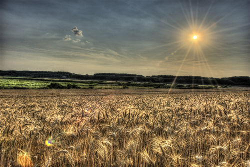 Gold-field