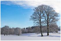 Stiller Wintertag von Waldemar Moll