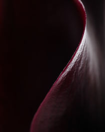 Curve of Black Calla Lily by Colin Miller