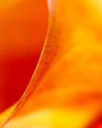 Flower-011