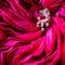 Flower-016