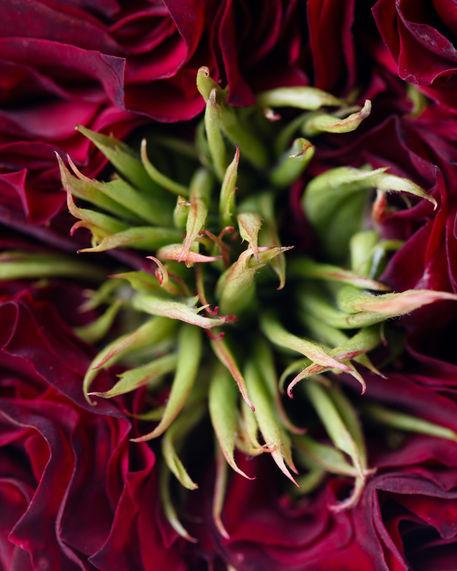 Flower-003
