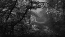 Nebelwald von Norbert Maier