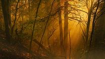 Herbstlicht von Norbert Maier