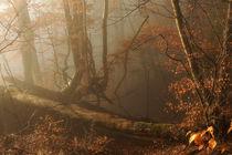 Herbst-Idyll von Norbert Maier