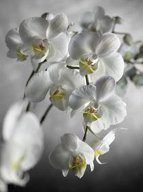 Orquídeas von Joserra Santamaría