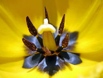 Blütenkelch von Thomas Brandt