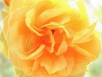 Im Licht II von flowers-and-sun