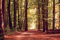 Waldweg von Thomas Brandt