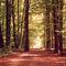 Waldweg-im-herbst