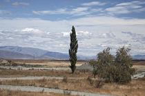 single poplar against a sky von michal gabriel