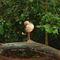 La20090526ls029-parque-das-aves-bird-park-red-legged-seriema