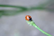 Ladybug by Nick Flegg
