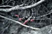 Claw by Nick Flegg