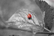 Ladybird by Nick Flegg