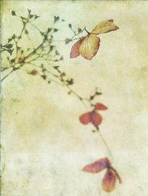 hydrangea von Franziska Rullert