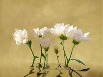 Blütenträume von Ingrid Clement-Grimmer