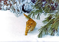 Yellow Cat Walking in the Snow by Deborah Willard
