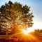 Autumn-tree