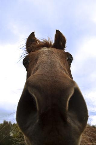 Horse-up-nostril-artflakes-hq