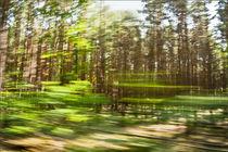 Waldrausch V von Hartmut Fittkau