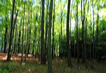Waldgeflüster von Wolfgang Dufner