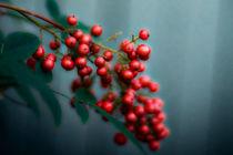 Berry by Deborah Wolfe