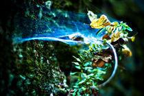 Fairy Web by Deborah Wolfe